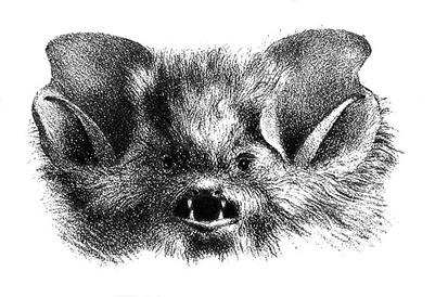 scary bat head