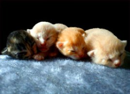 four small kittens on pillow