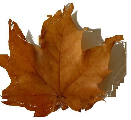 fall leaf with shadow