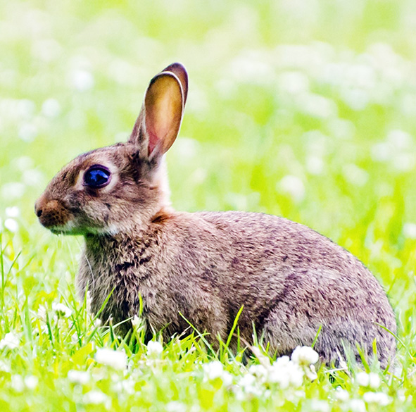 rabbit in meadow with spring flowers