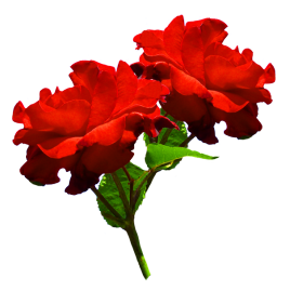 clipart of two red roses
