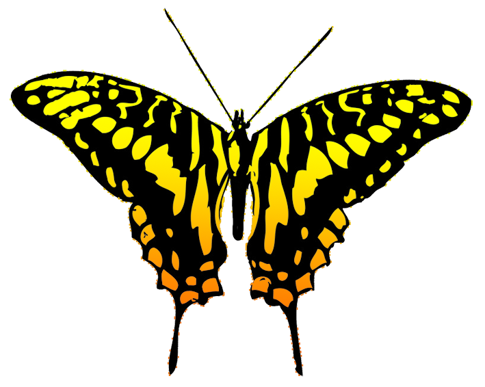orange and black butterfly clipart