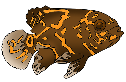 Very spotted fish drawing
