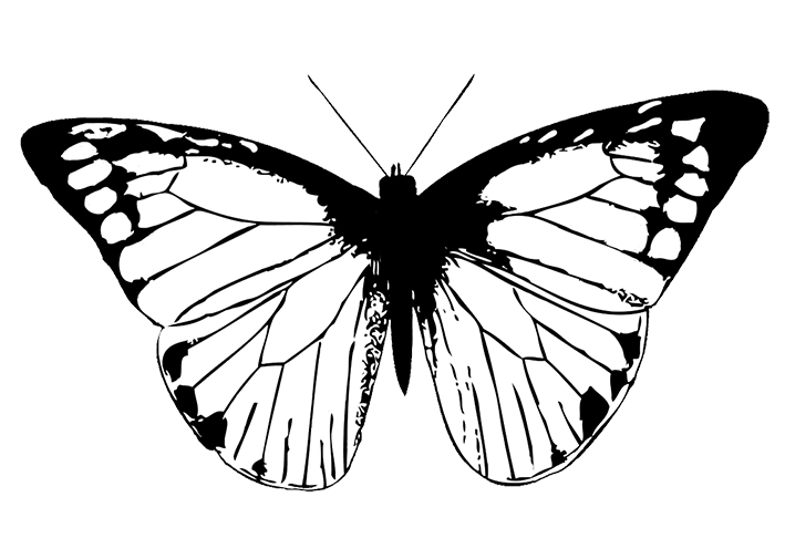 butterfly image black white