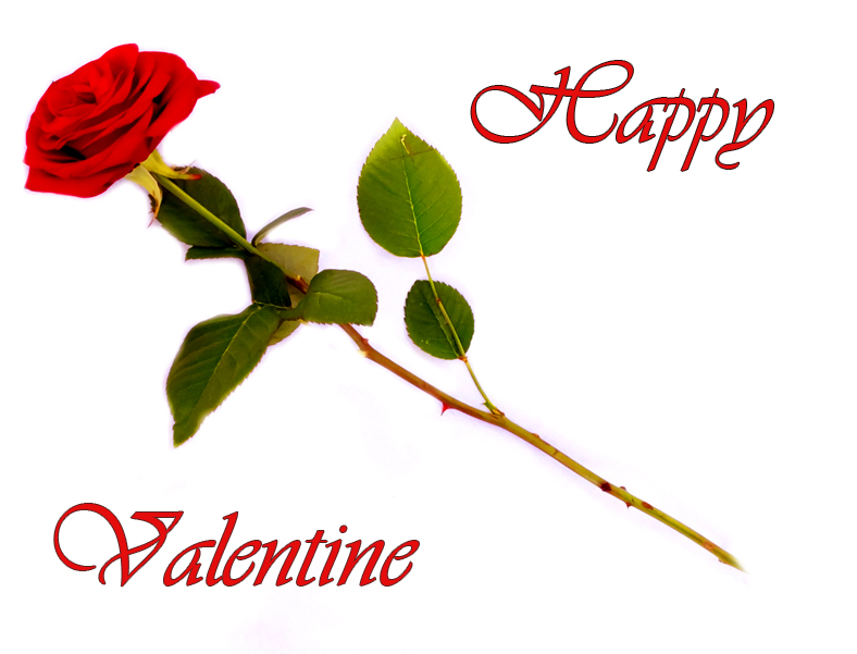 Happy Valentine Day red rose