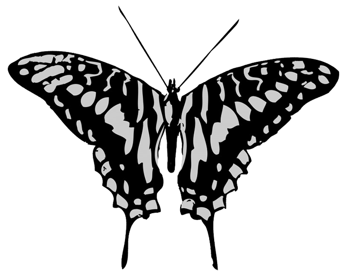 Black and grey butterfly drawing