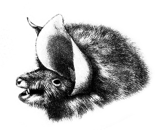 sideways drawing of bat head