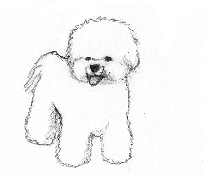 white poodle drawing