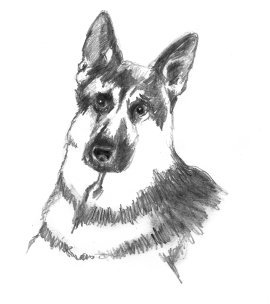 sketch of German shepherd dog