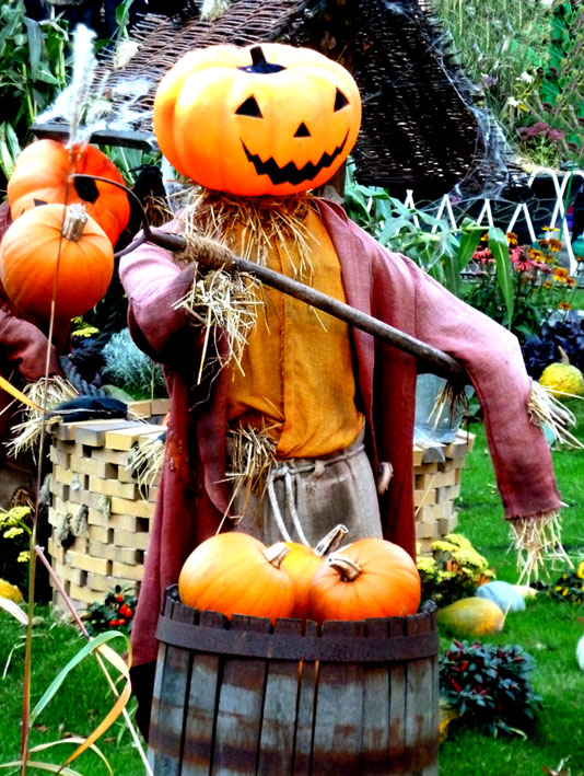 funny pumpkin pictures
