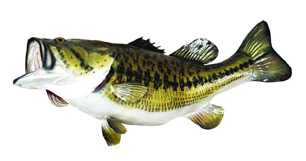 Large mouth bass clipart