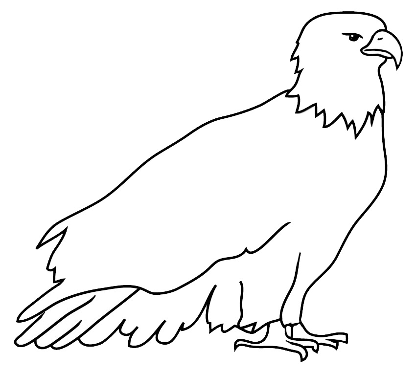 Outline sketch of bald eagle