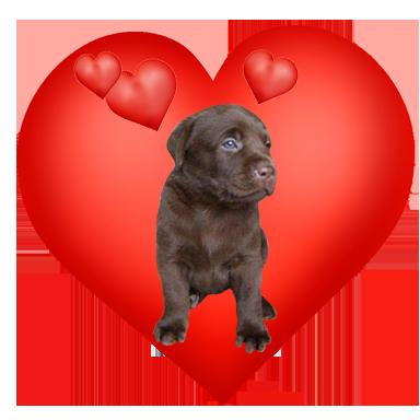 cute Valentine heart with labrador puppy