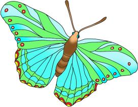 beautiful butterfly green