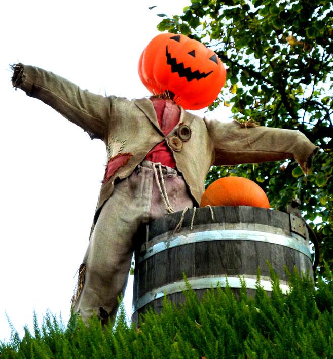 happy pumpkin man