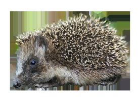 cut-out hedgehog clipart