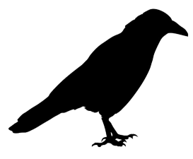 jackdaw silhouette