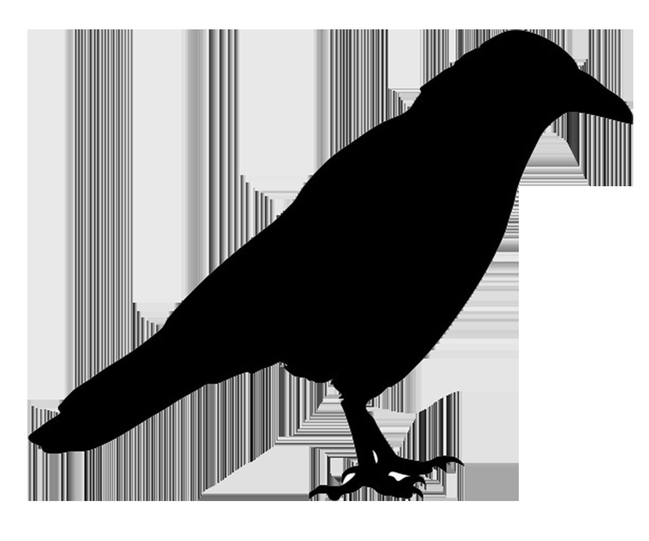 jackdaw silhouette