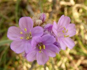 flower pics small flower