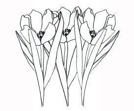 flower images to color tulips
