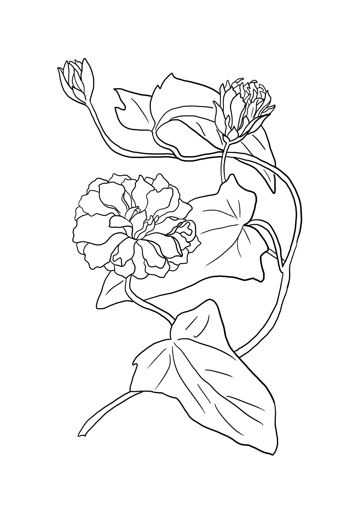 printable flower drawing to color