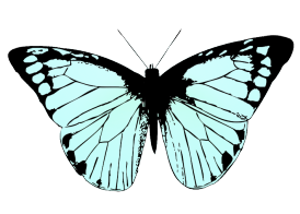 soft blue colored butterfly wings