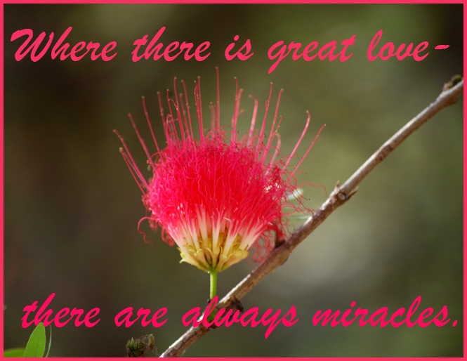 quote about love and miracles