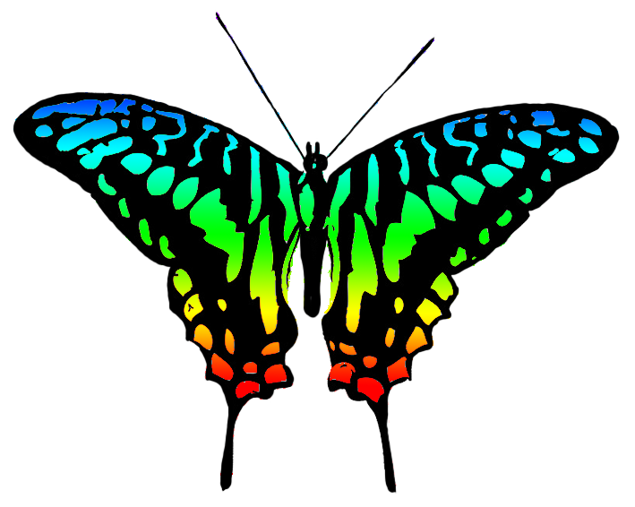 multicolored butterfly image
