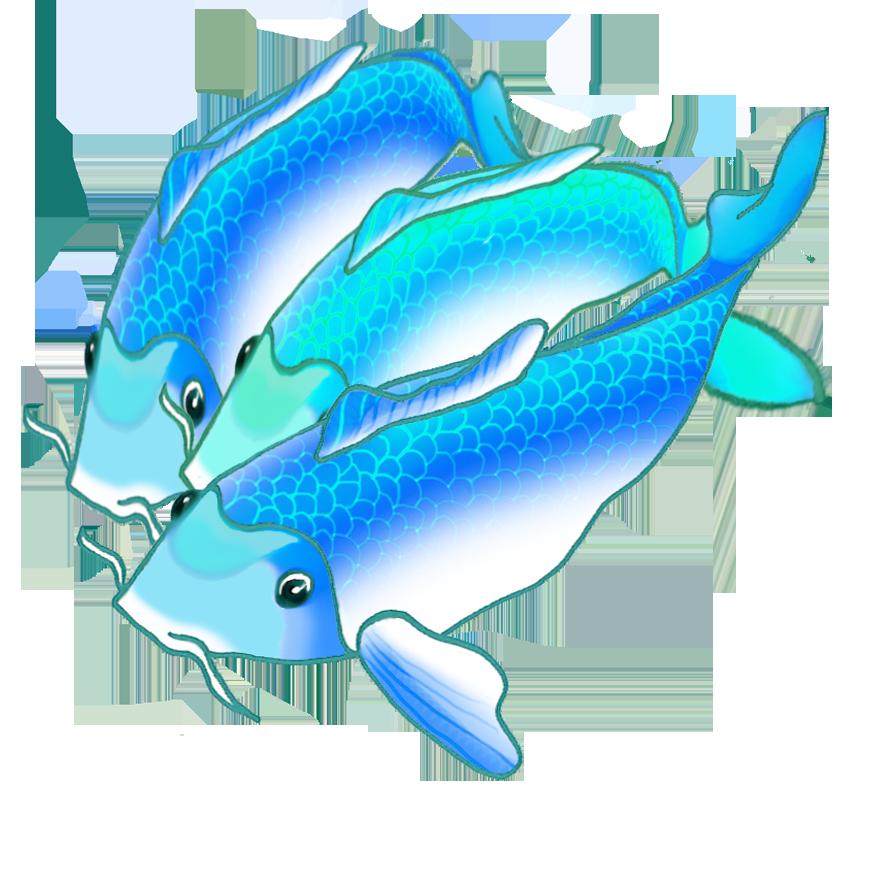 three blue koi fish