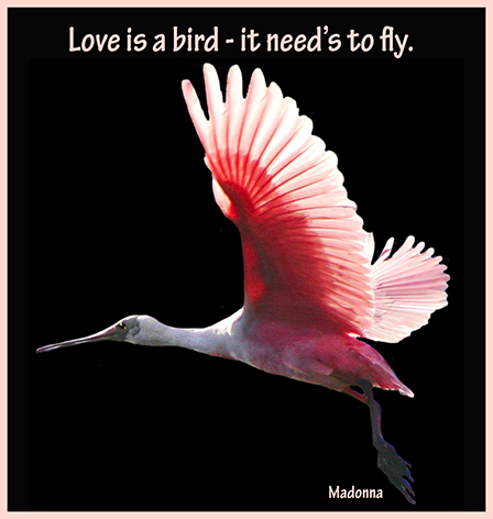 love is a bird quote