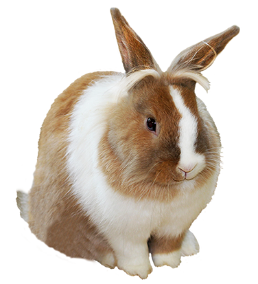 cute Easter bunny clipart