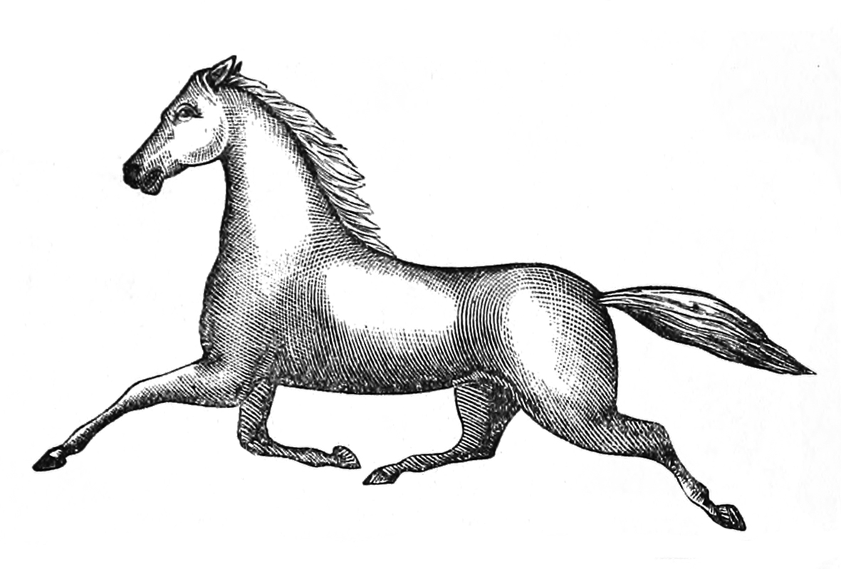 Trottering horse picture