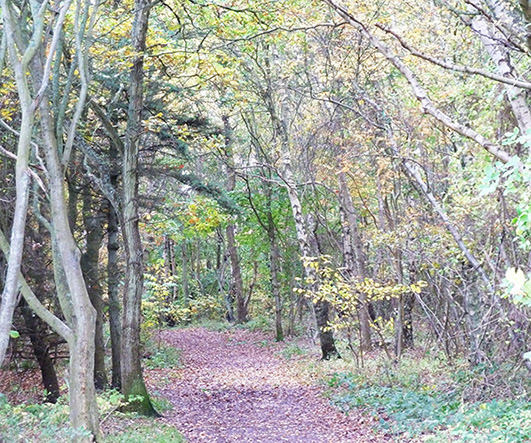 fall scenery with footpath