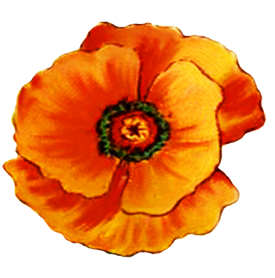 head of poppy flower