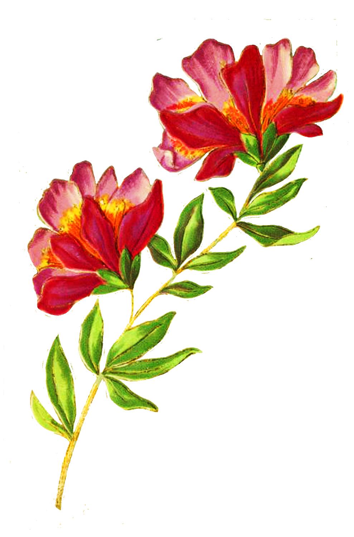 beautiful delicate flower