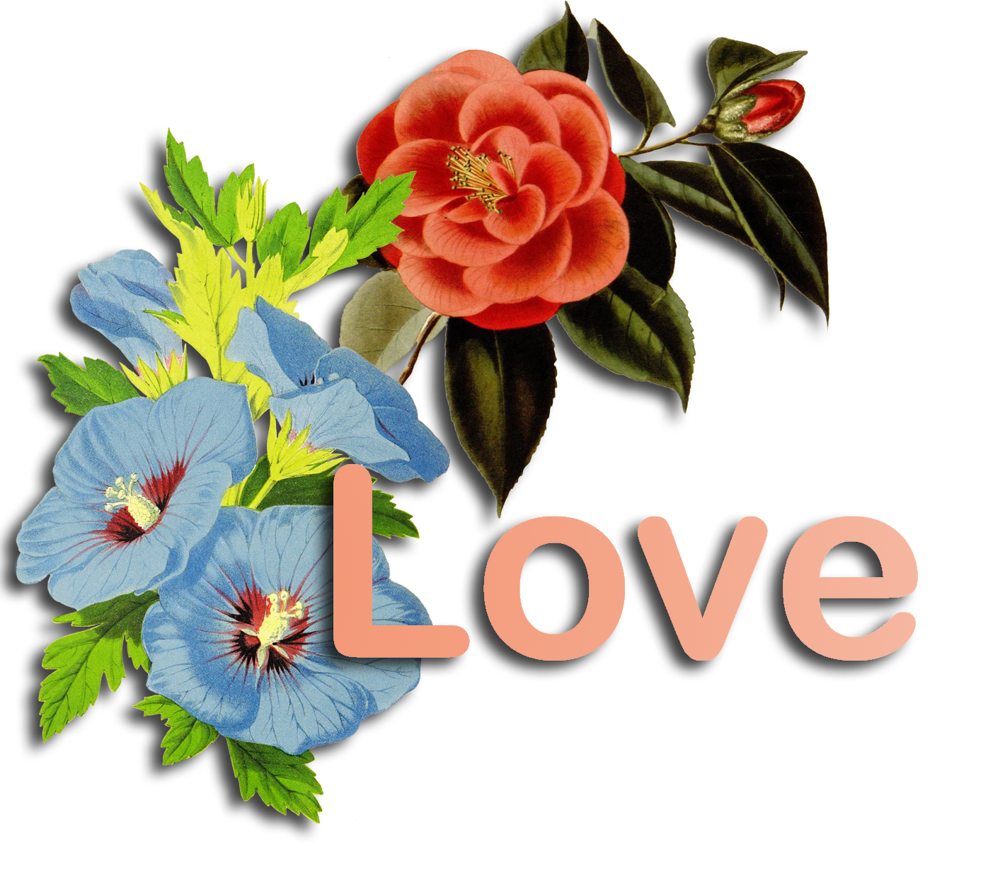 love word and flowers