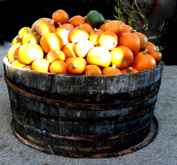 lots of pumpkins for Halloween
