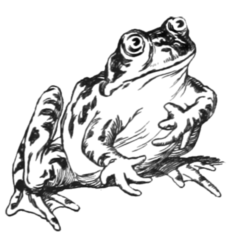 funny frog drawing