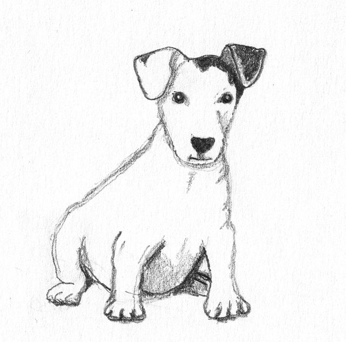 dog sketch of cute little dog