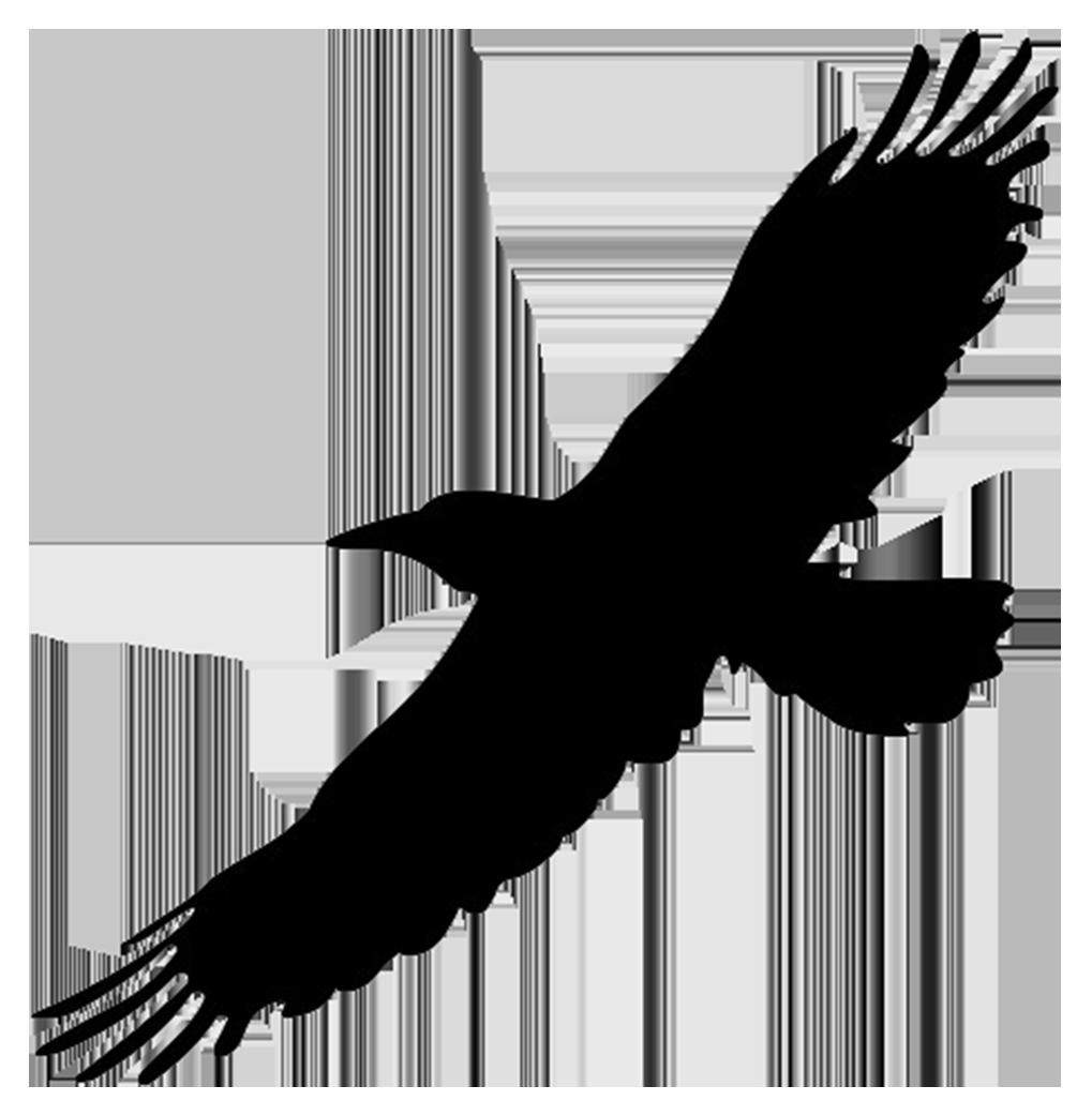 silhouette of flying big bird