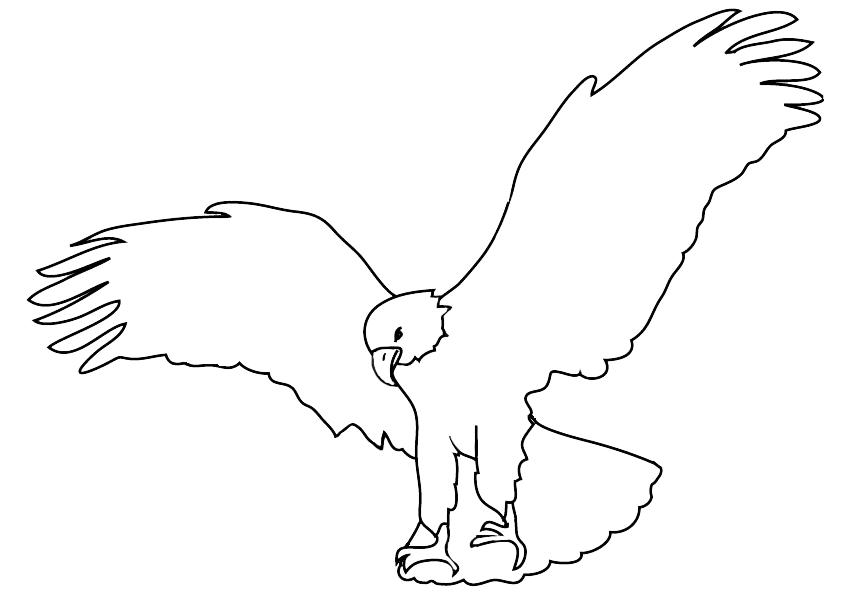 sketch of bald eagle landing