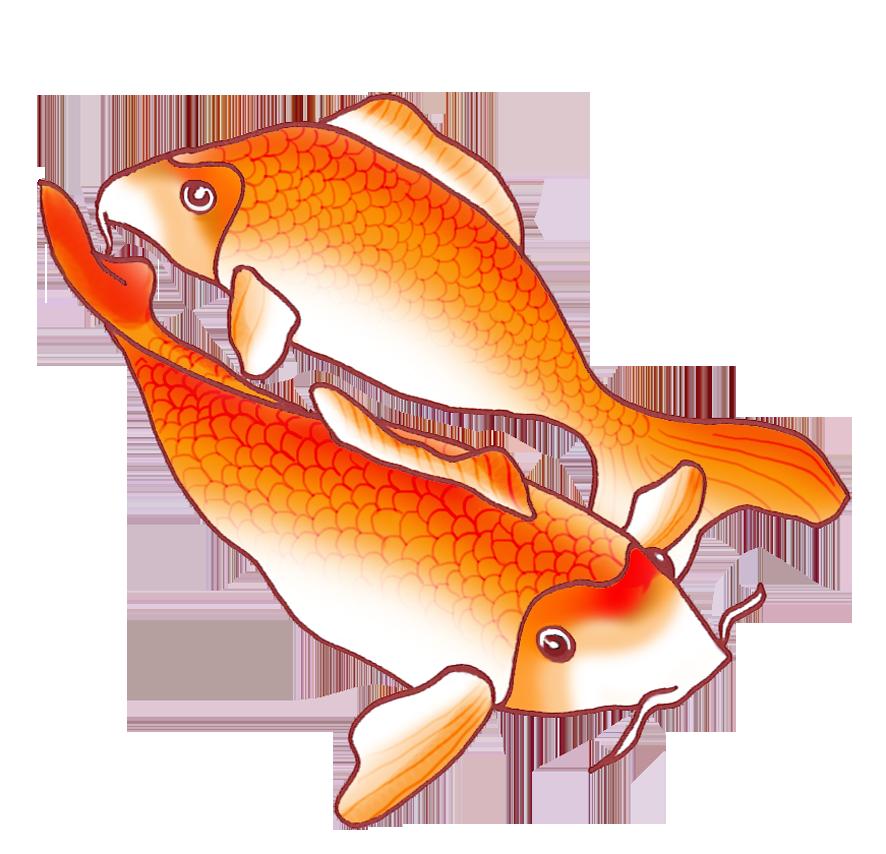 two orange koi fish drawing