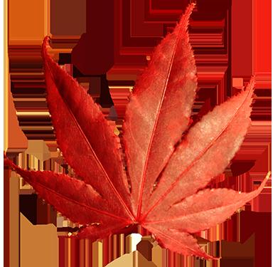 red lobed fall clip art leaf