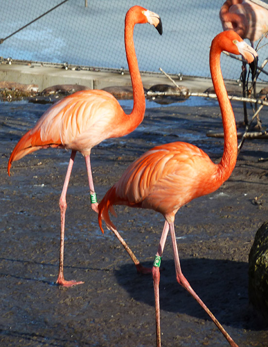 picture of two flamingos
