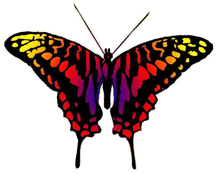 dangerous looking butterfly