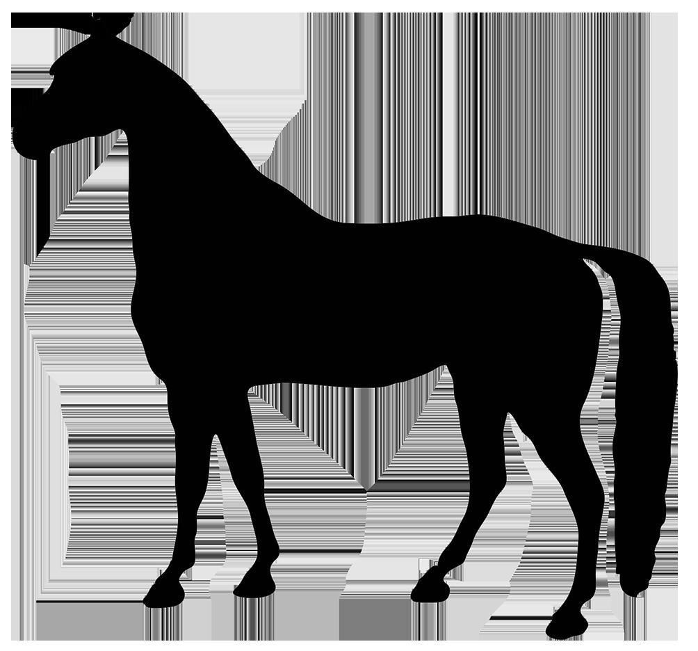 black silhouette horse