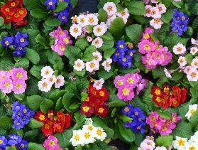 flowers in many colors