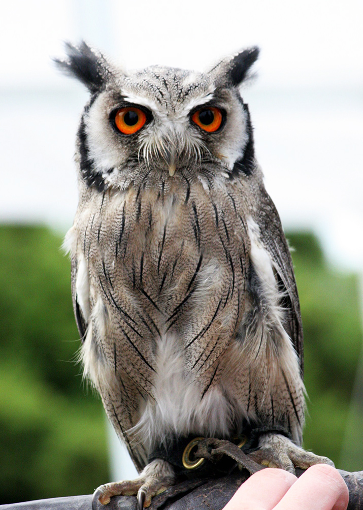 pictures of owls on hand