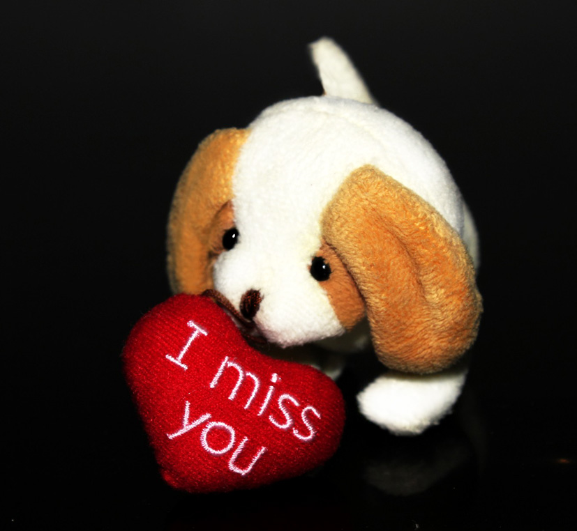 I miss you clipart with puppy