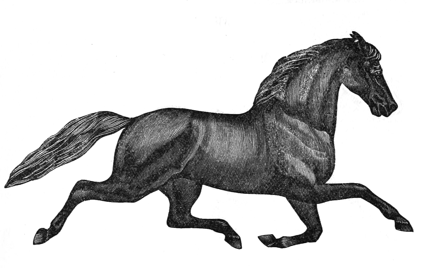 Victorian horse drawing